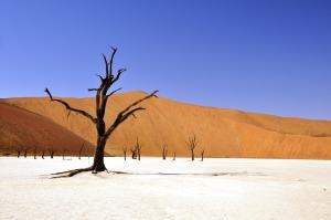tree-desert-namibia-dead-vlei-68661